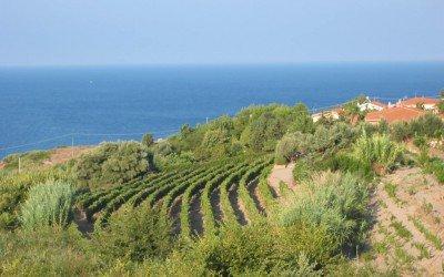 Auf Sardinien geliebt und im Land Tirol verkannt! + Buchtip Ziegenküche von Erica Bänzinger