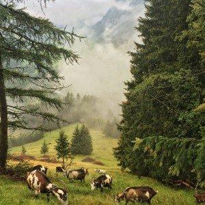 Meine Ziegen auf einer ihrer Lieblingsweiden, dem Ocherloch